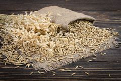 Oat cereal grain. On wood background Stock Images