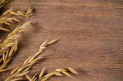 Oat cereal grain on wooden board background Royalty Free Stock Photography