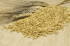 Oat corns Stock Photo