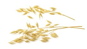 Free Oat Ears Isolated On White Background With Clipping Path Stock Image - 115378941