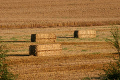 Oat field at harvest. With bales of hay Stock Photography