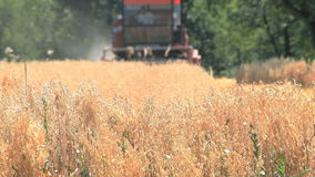 Oat Field Harvesting stock video footage