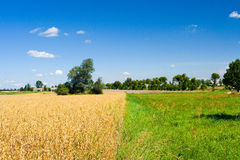 Oat field and meadow Stock Photography