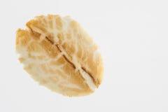Oat flake Avena sativa isolated. On white background Stock Image