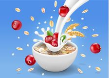 Oat flakes with cranberry. Oatmeal and berry in milk splash advertising vector illustration.  stock illustration
