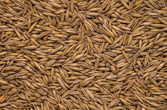Oat grain Stock Photography