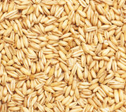 Oat grain, background and texture. Natural oat grains background, closeup Royalty Free Stock Photo