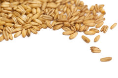 Oat grain closeup, isolated on white background. Oat grain, isolated on white background stock photography