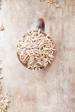 Oat grain Royalty Free Stock Images