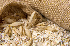 Oat grain Stock Images