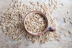 Oat grain Royalty Free Stock Photography