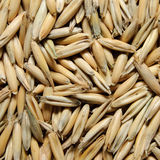 Oat grains Stock Photography