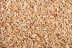 Oat grains background Royalty Free Stock Photo