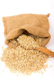 Oat grains in a burlap sack. Pile of oat grains in a burlap sack on white background stock photos