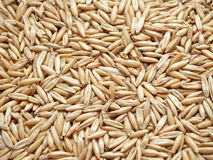 Oat grains Royalty Free Stock Photo