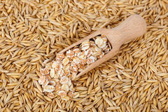 Oat grains and oat flakes. Oat flakes in scoop and natural oat grains with husk  for background, closeup shot. Heap of organic oat grains with oatmeal in wooden Royalty Free Stock Images