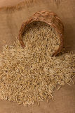 Oat grains Stock Image