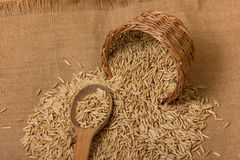 Oat grains Stock Images
