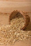 Oat grains Stock Images
