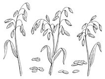 Oat plant graphic black white isolated sketch illustration vector. Oat plant graphic black white isolated sketch illustration Royalty Free Stock Images