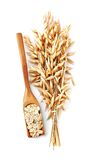 Oat plant with oats corn. Oat plant with oats corn isolated on white close up Stock Photos