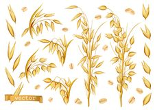 Oat plants, Rolled oats. 3d realistic vector icon set. On white background royalty free illustration