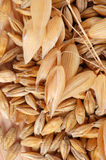 Oat with seeds Stock Photography