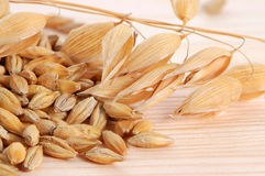 Oat with seeds Stock Image