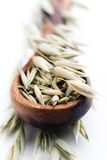 Oat seeds Stock Photography