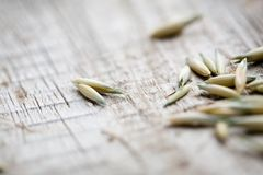 Oat seeds Royalty Free Stock Photo
