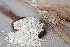 Oat seeds Stock Photos