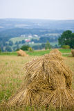 Oat Shocks in Field. Overlooking valley with barn and fields Stock Photos