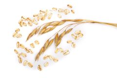 Oat spike with oat flakes isolated on white background.  Stock Photos