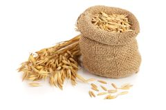 Oat spike with grains in bag isolated on white background.  Stock Images
