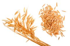 Oat spike with grains isolated on white background.  Royalty Free Stock Photo