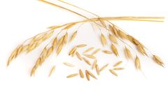 Oat spike isolated on white background. Close-up Stock Photography