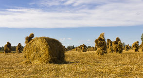 Oat stakes and hay roll Royalty Free Stock Photo