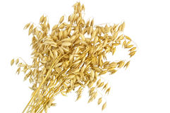 Oat stalks sheaf. Sheaf of stalks of oats with a light shade on white background Stock Image