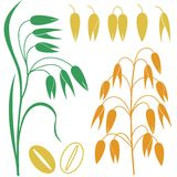 Oat. Vector illustration (EPS 10&#x29 Royalty Free Stock Image