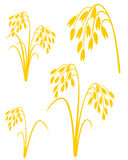 Oat. Vector illustration (EPS 10 Royalty Free Stock Photo