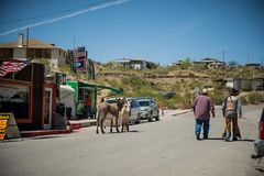 Cowboys and mules in the City of Oatman on Route 66 in Arizona. Oatman is a town in the Black Mountains of Mohave County, Arizona, United States. Located at an stock image