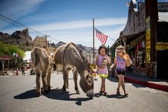 Two cute girl feeding some mules in the City of Oatman on Route 66 in Arizona. Oatman is a town in the Black Mountains of Mohave County, Arizona, United States royalty free stock photography