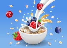 Oatmeal διαφήμιση και δασικά μούρα, ράντισμα γάλακτος και βακκίνιο, το βακκίνιο, σμέουρο Στοκ φωτογραφία με δικαίωμα ελεύθερης χρήσης