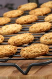 Oatmeal cookies Stock Photography