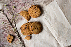 Oatmeal cookies on the paper and spring branch Stock Images