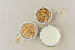 Oatmeal, oatmeal flakes and oats grains. stock photography