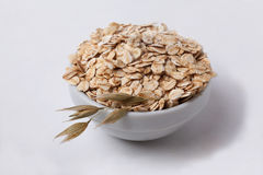 Oatmeal oats in a spikelet pialochke Royalty Free Stock Photos