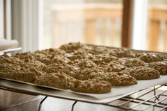 Oatmeal Scotchies Cookies Stock Image