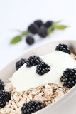Oatmeal with yogurt and blackberries Stock Photography