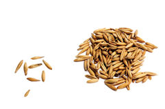 Oats Stock Photography